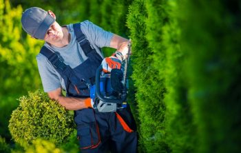 3 Best Battery Operated Hedge Trimmer In 2021