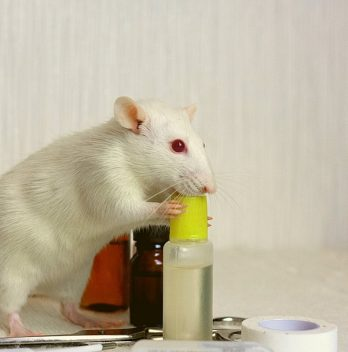 Best Rat Poison That Won't Harm Other Animals
