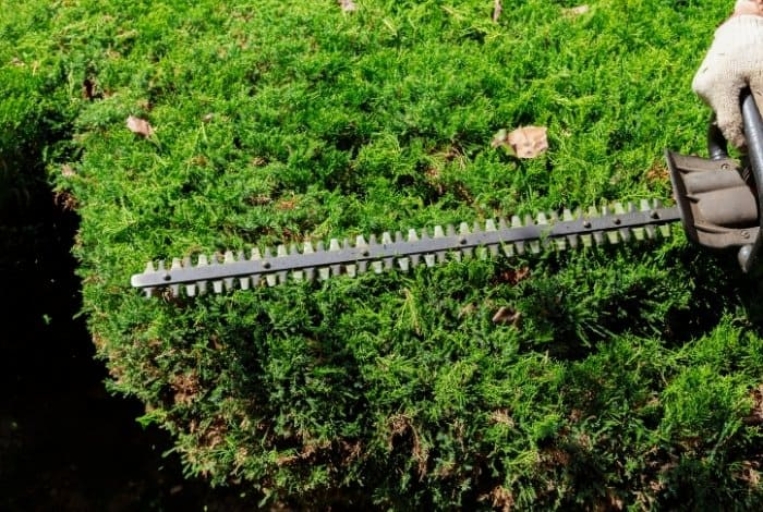 Features of the Best Battery Operated Hedge Trimmer- teeth