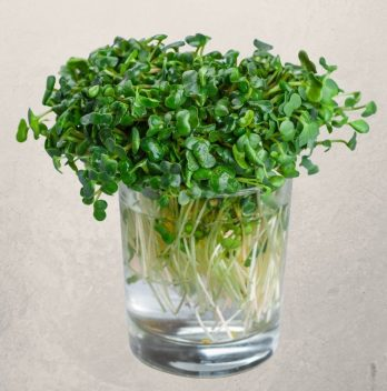 Growing Micro-Greens Without Soil
