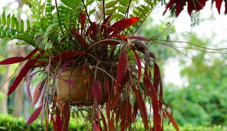 How to Care for Ferns in Hanging Baskets