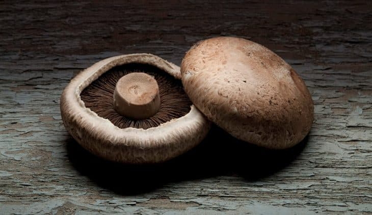 How to Grow Portobello Mushrooms from Store Bought
