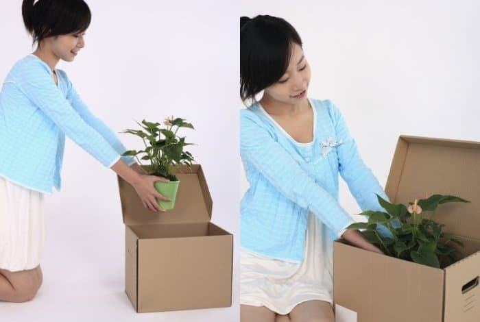 Restrictions for Shipping Plants Internationally