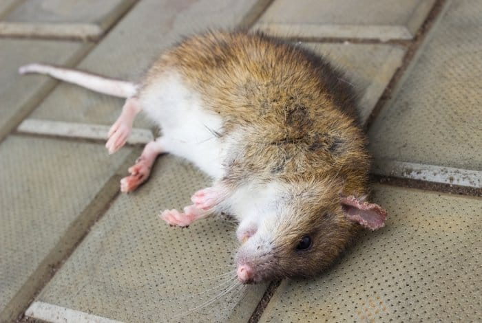 What's in Rat Poison