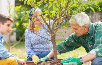 How To Plant A Lemon Tree Outdoors