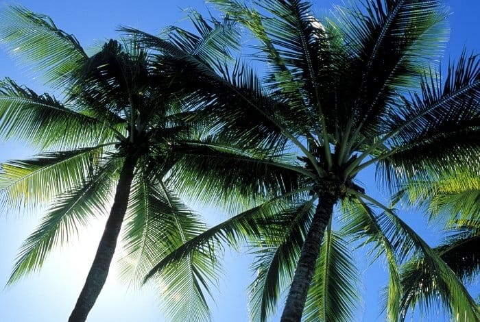 Choosing Palms that You Can Grow