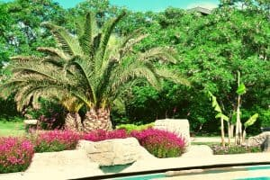 How To Care For Palm Trees Outdoors