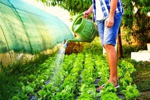 How Often Should You Water A Vegetable Garden