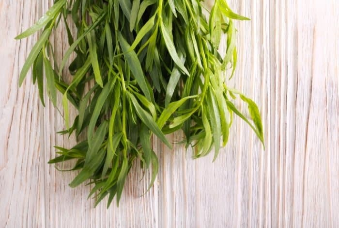What Does Tarragon Look Like