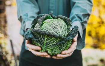 When is Kale Ready for Harvest