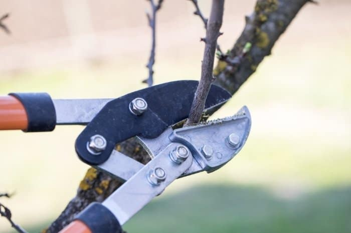 Common Mistakes To Avoid When Pruning Weeping Cherry