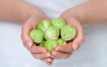 When do you Harvest Brussels Sprouts