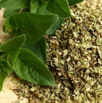 Does Oregano Come Back Every Year?
