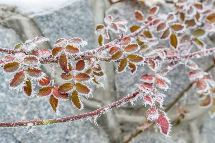 Know Your Frost Dates