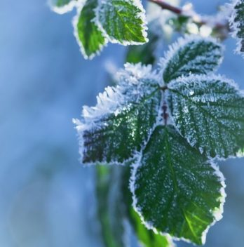 What Temperature is too Cold for Plants