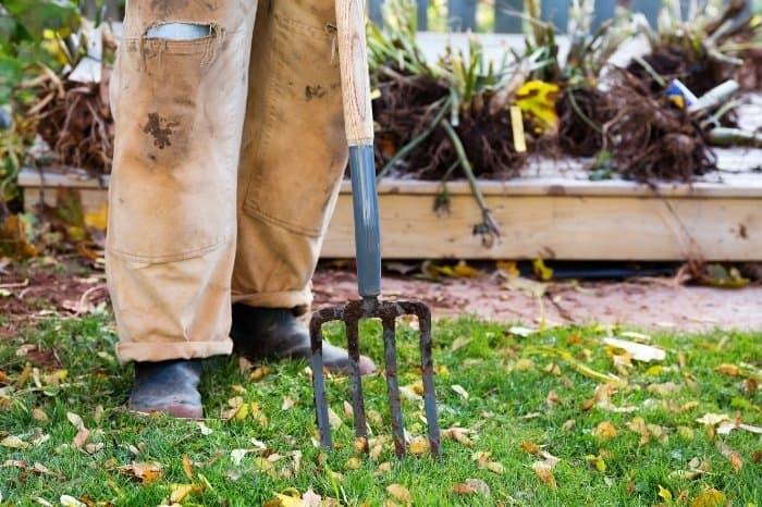 Dig Your Dahlias Before Winter