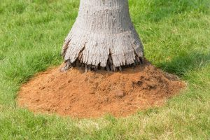 How Deep are Palm Tree Roots?