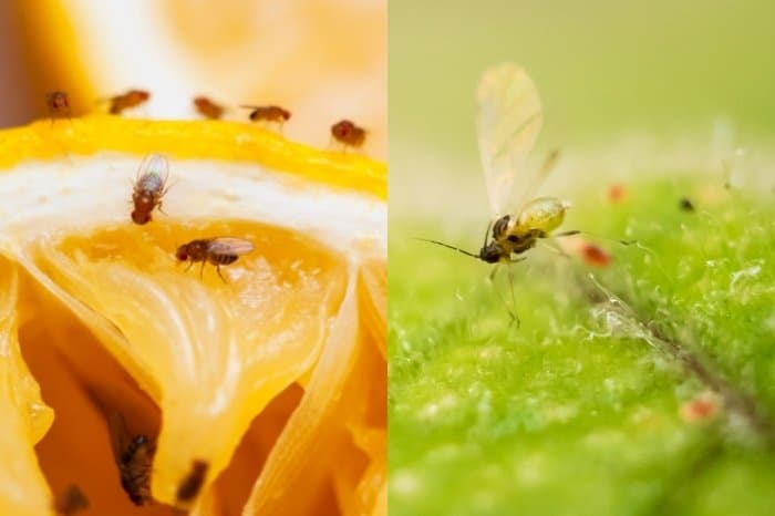 How To Identify And Kill Gnats In The Soil
