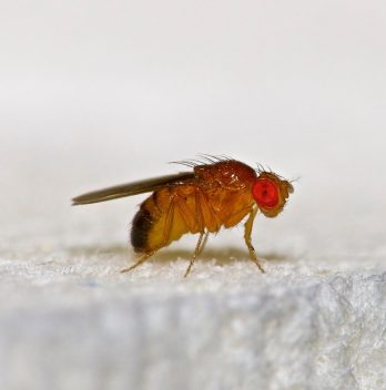 How To Kill Gnats In The Soil - An Overview