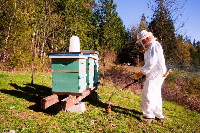 Keeping Yellow Jackets From Your Beehives