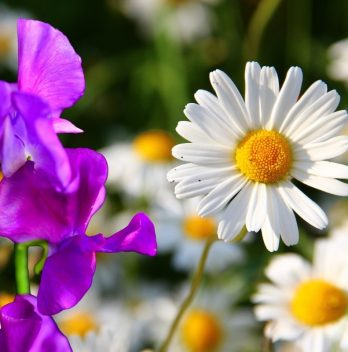 What Is April's Birth Flower – What You Need To Know