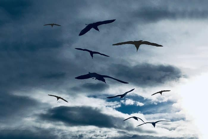 How Do Birds Act Before A Storm