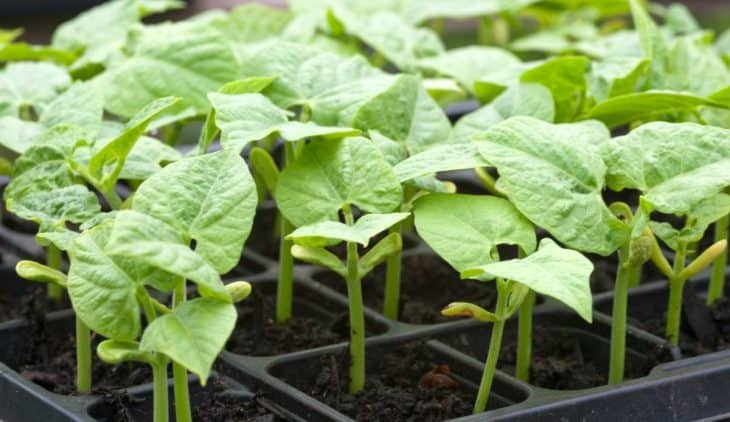 What Do Beans Grow On? - Containers Or Garden?