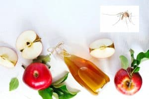 Does Vinegar Repel Mosquitoes – A Study